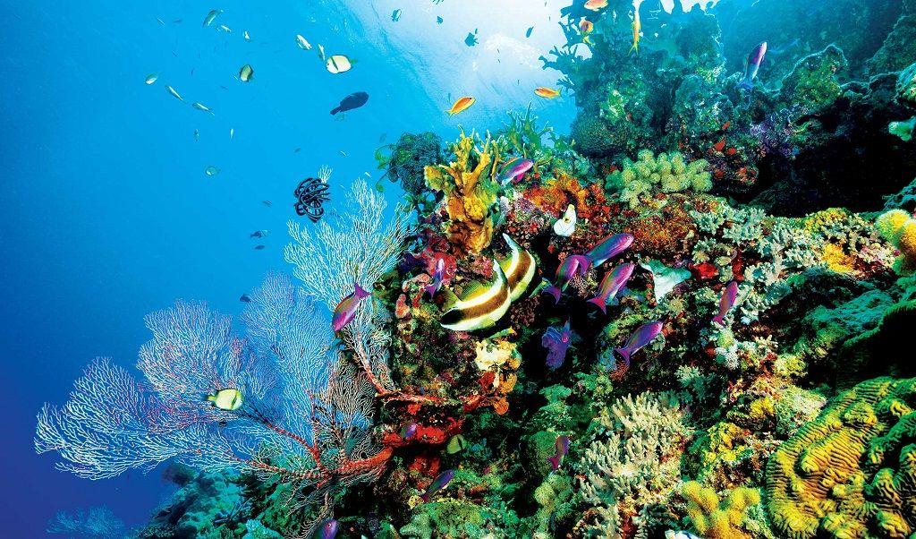 دیواره بزرگ مرجانی استرالیا - ارزانترین ایرلاین برای پرواز به استرالیا