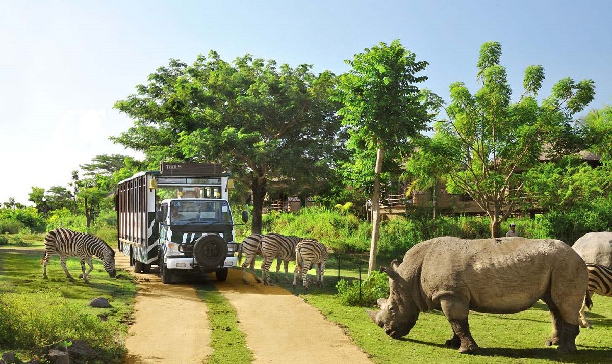 بلیط یک طرفه اندونزی برای سفارت - باغ وحش اندونزی Indonesian Zoo