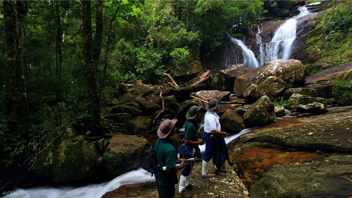 برنامه پروازهای رفت و برگشت سریلانکا - جنگل حفاظت شده سینهاراجا سریلانکا Sinharaja Forest Reserve :